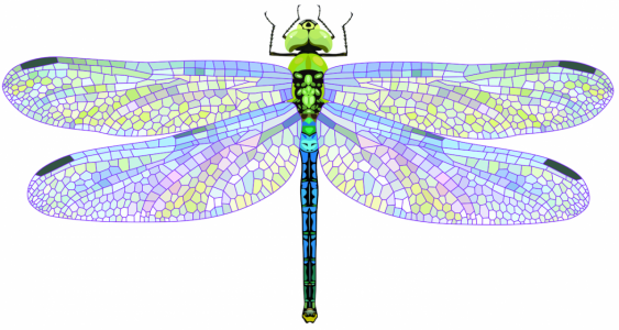 Dragonfly with mosaic coloured wings